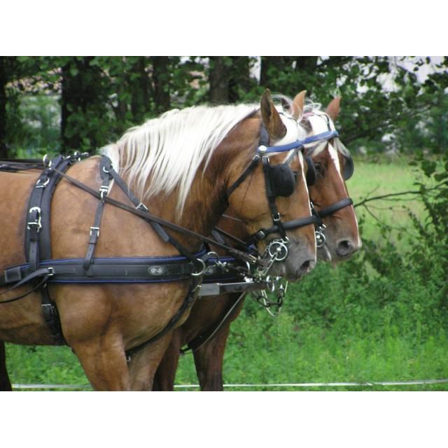 HARNAIS ZILCO GEORGES BOWMAN à deux chevaux