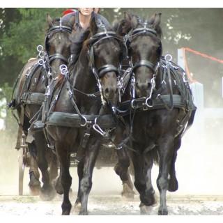 Harnais Zilco ZGB à 4 chevaux