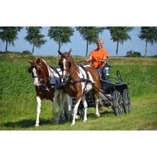 Harnais Euro-Tech Idéal Equestrian pour atteler en paire