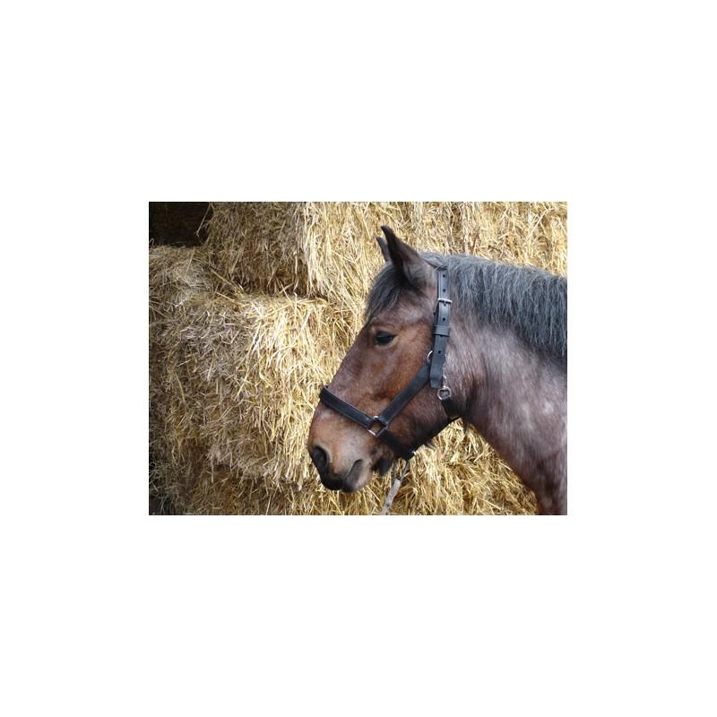 Licol pour chevaux de trait