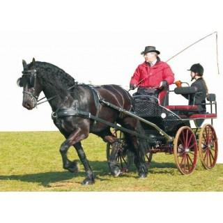 Harnais ZILCO ELITE à un cheval