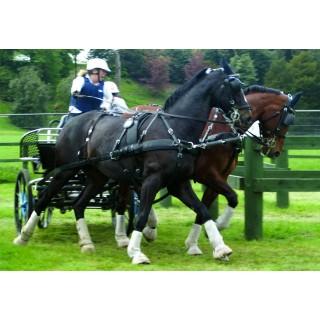Harnais ZILCO ELITE à 2 chevaux