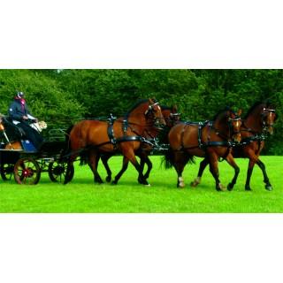Harnais Zilco Classic à 4 chevaux