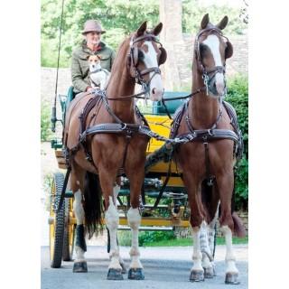 Harnais Zilco ZGB brun à 4 chevaux