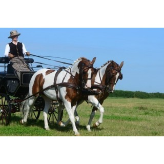 Harnais attelage euro-tech idéal equestrian